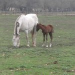 Elody, a 1 day old foal