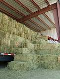 hay and shavings