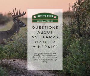 AntlerMax and Deer Mineral Q&A graphic advertisement featuring a deer with antlers in the background